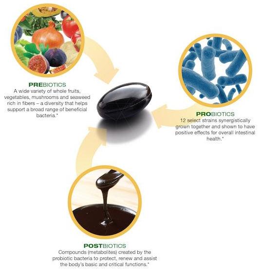 Prebiotics Probiotics Postbiotics image